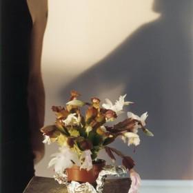 """Wolfgang Tillmans:  """"Tiga Cactus"""" 61 x 51 cm.  C-print, enmarcado. 2005"""